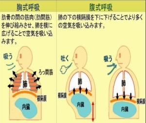 胸式呼吸と腹式呼吸の違い