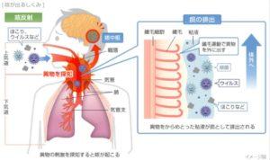 咳は異物を取り除く防御反応