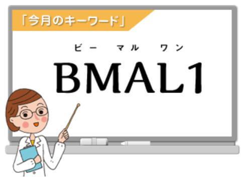 ビーマル1活用術