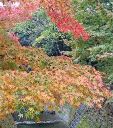 仙巌園紅葉