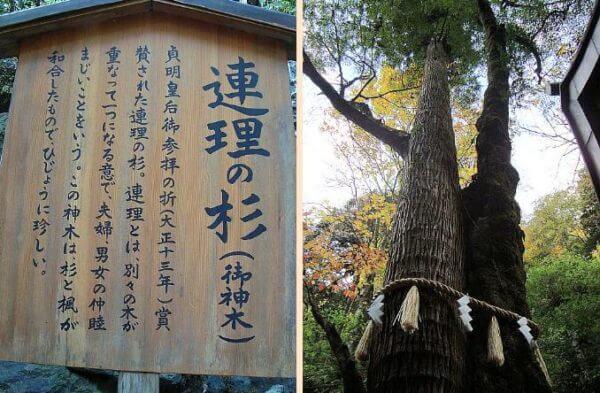連理(れんり)の枝