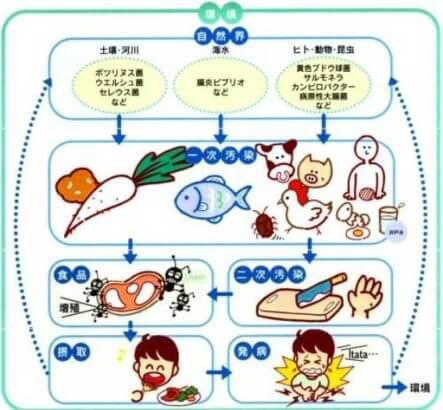 食中毒菌の感染経路