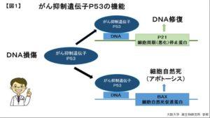 ガン抑制遺伝子