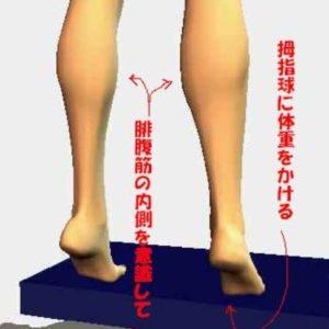 ふくらはぎの筋肉