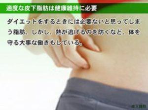 皮下脂肪の役割