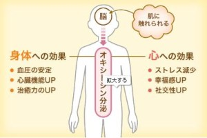 オキシトシン分泌
