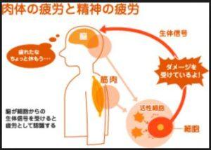 出典:日本予防医薬