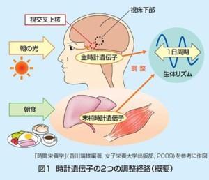 出典:花王健康科学研究会