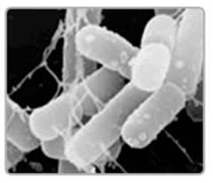 乳酸菌の効果的摂り方
