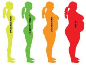 肥満度チェック