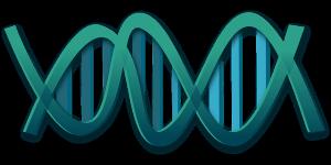 長寿遺伝子