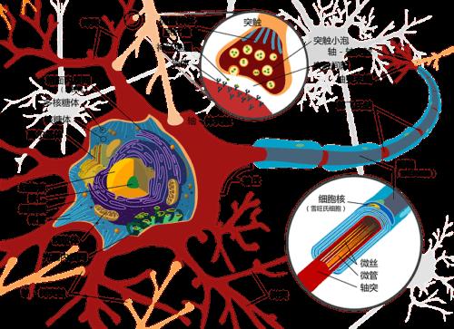 脳の神経細胞